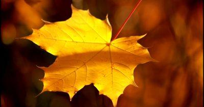 Προφυλαχθείτε από τις φθινοπωρινές ιώσεις με φυσικό τρόπο