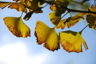 autumnal-leaves-67223_1280
