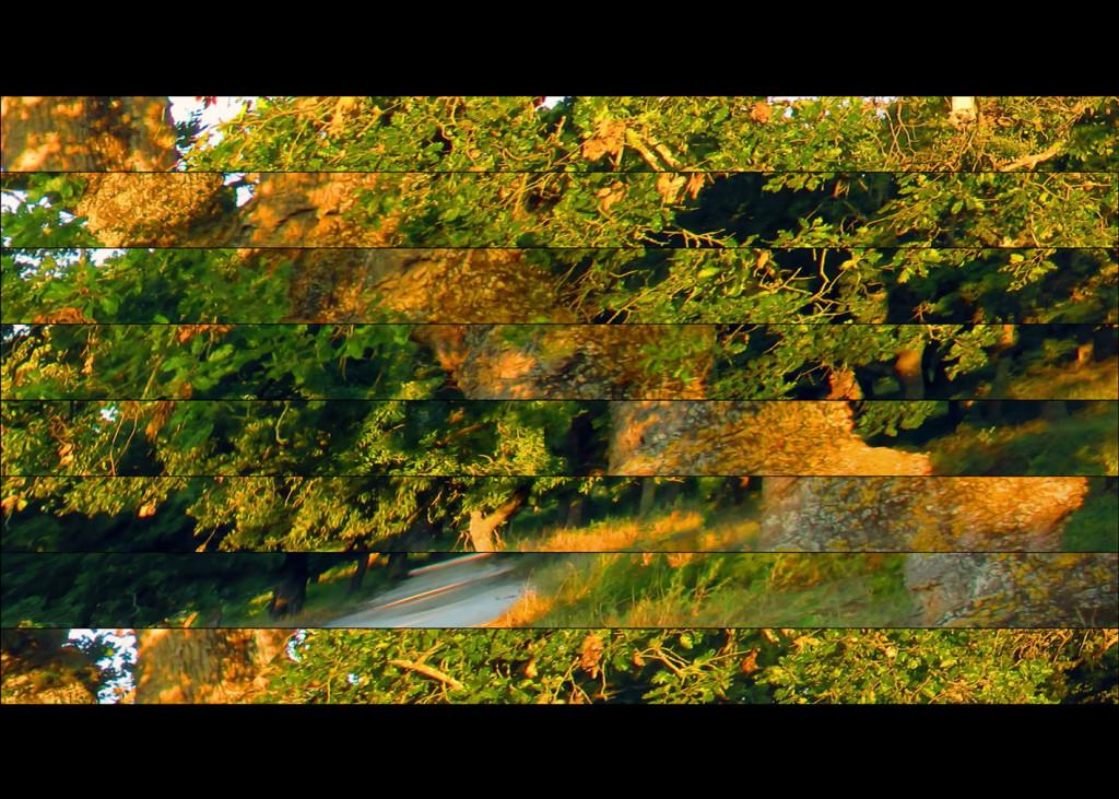old-timer oak(70x50)_pr