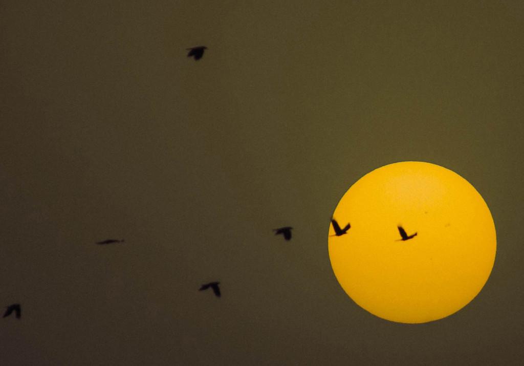 birds sun