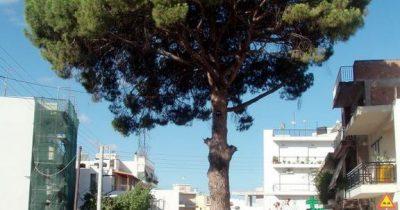 Κάποιος να μας σώσει από το δέντρο