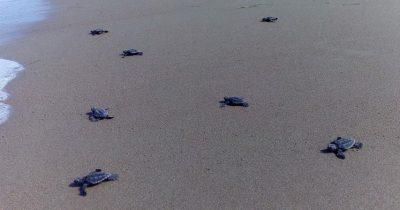 Τα τελευταία αργοπορημένα χελωνάκια!