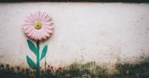 Ένα λουλούδι στη γλάστρα της καθημερινότητας