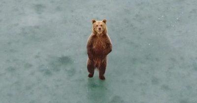 Αρκούδα κάνει βόλτες στην παγωμένη λίμνη της Καστοριάς