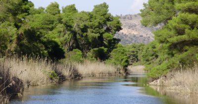 Να μην γίνουν οι δασικοί χάρτες, κερκόπορτα για την καταπάτηση δημόσιας δασικής γης στη Στροφυλιά!