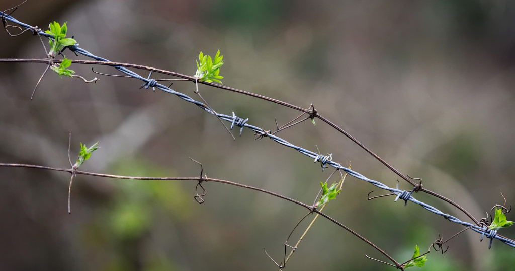 barbed-2278609_1920