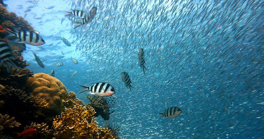 fish-378286_1280-fb