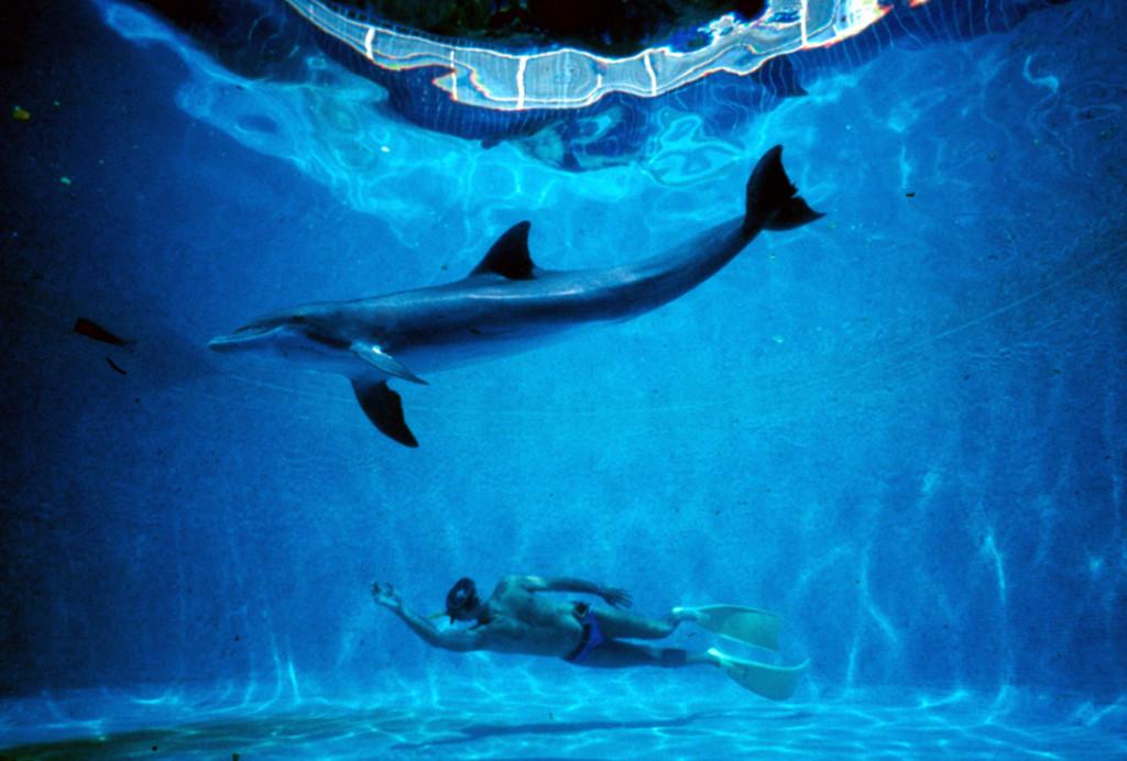 Dolphin_Man_2
