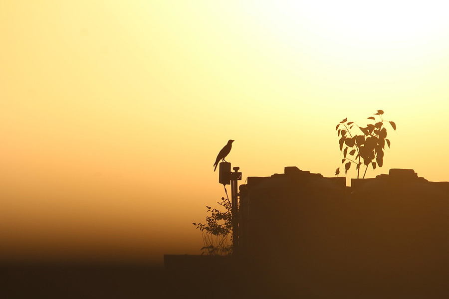 crow-2735907_1280 (1)