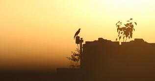 crow-2735907_1280 fb