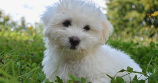 dog-whitefb
