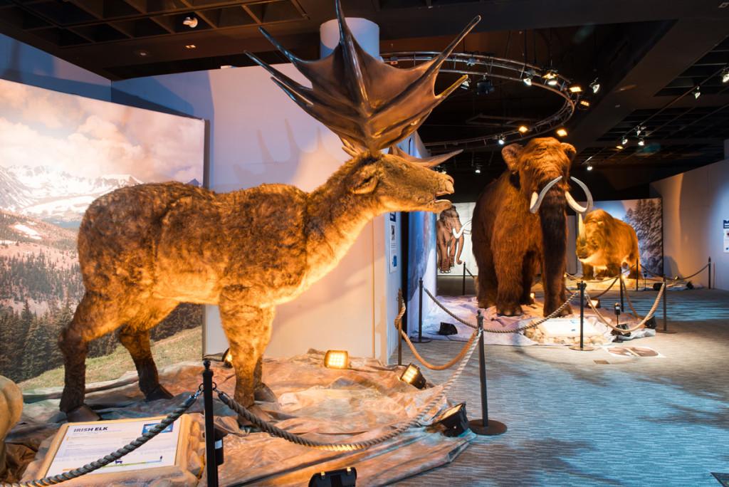 Ice-Age-Irish-Elk