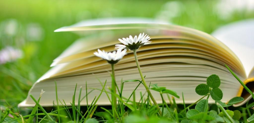 book-2304389_1280 (1)