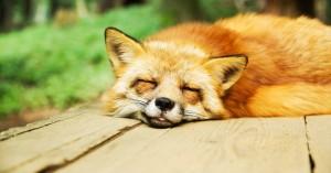 Σε πλήρη απαγόρευση των εκτροφείων ζώων για γούνα προχωρά η Νορβηγία