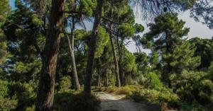 Θετικά εξελίξεις αλλά και έντονη ανησυχία για τις προστατευόμενες περιοχές από 10 περιβαλλοντικές οργανώσεις