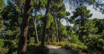 Θετικές εξελίξεις αλλά και έντονη ανησυχία για τις προστατευόμενες περιοχές από 10 περιβαλλοντικές οργανώσεις