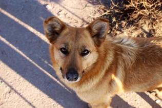 dog-3140166_1280