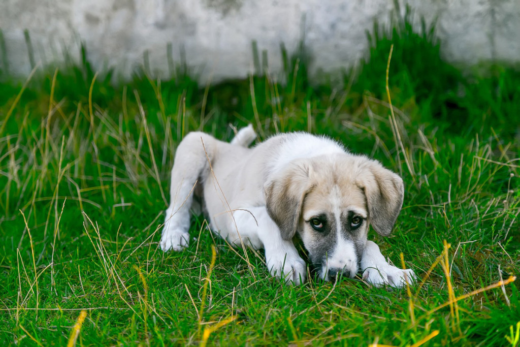 dog-stray
