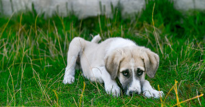 ΠΦΠΟ: Τεράστιες οι ευθύνες του Πανελλήνιου Κτηνιατρικού Συλλόγου για τα αδέσποτα ζώα.