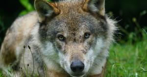Ποιος τελικά είναι ο ασύδοτος; Τα ζώα της άγριας πανίδας ή η ανθρώπινη δραστηριότητα;
