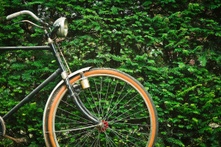 bicycle-bike-plant-163704