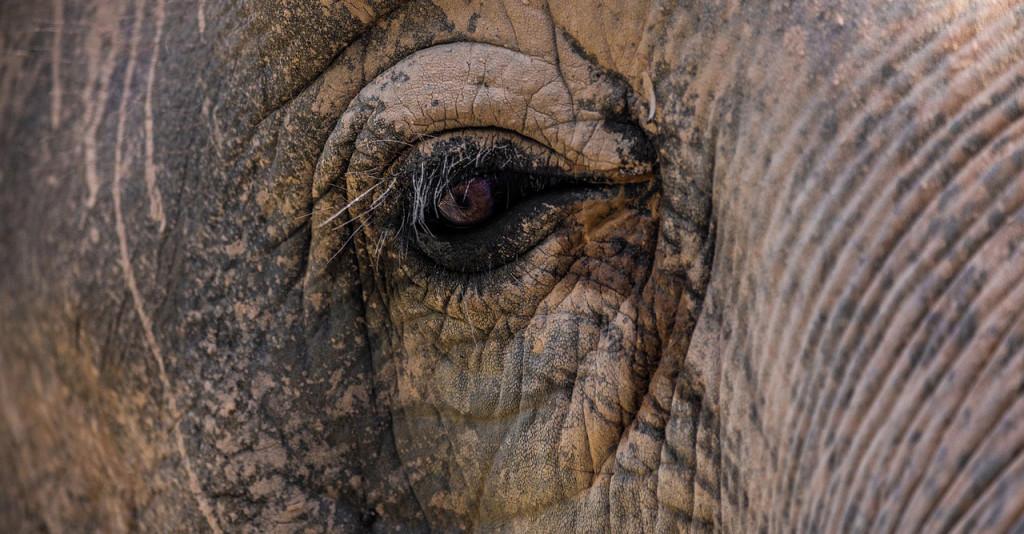 elephant-3264041_1280 (2)
