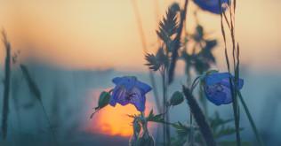 flower sunfb
