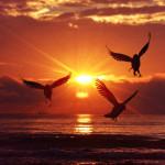 sunrise-1773094_1280