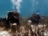 Επαναφύτευση των Υποβρύχιων Κήπων Ποσειδωνίας στους Λειψούς