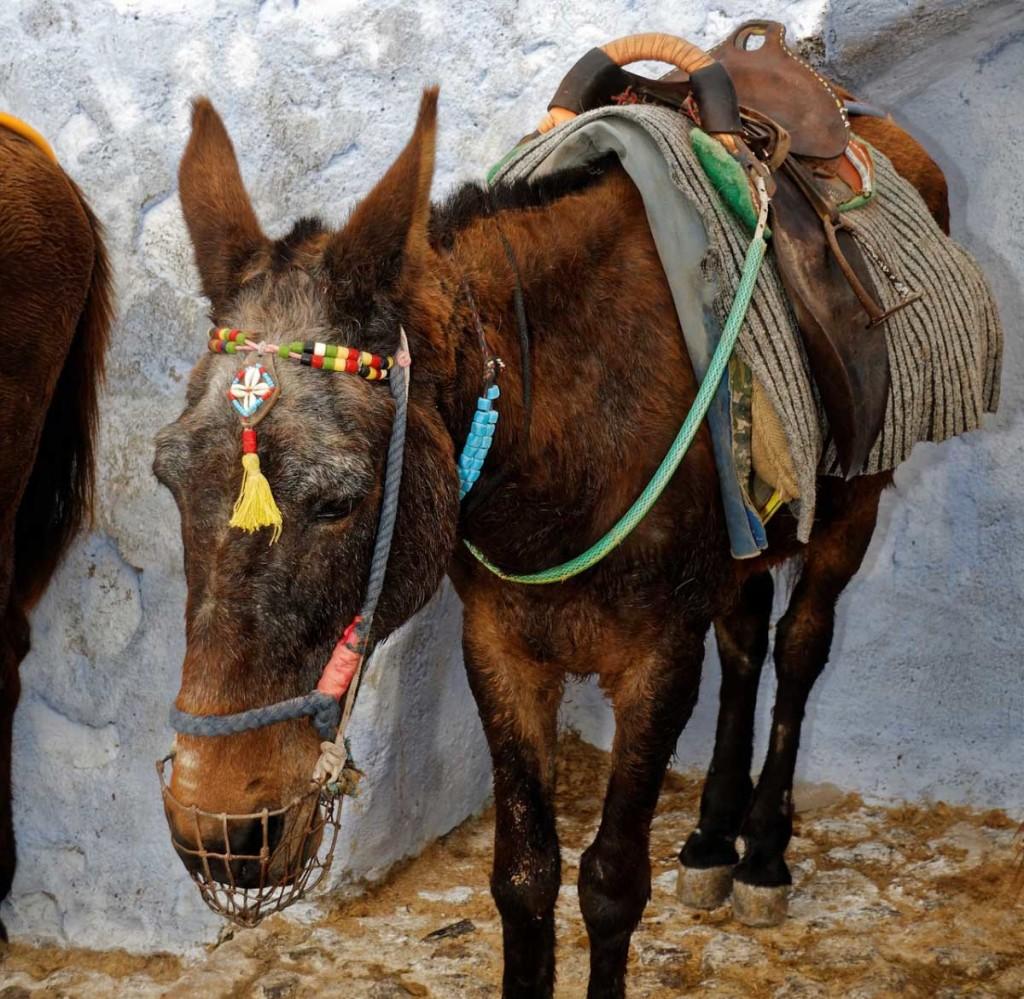 donkey-1029739_1920