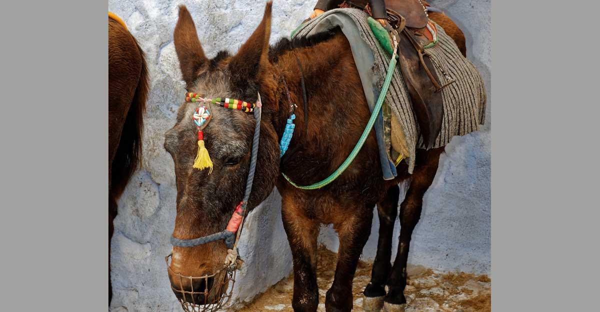 donkey-1029739_1920-2