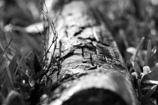 firewood-3508685_1280
