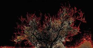 Σίση Σιακαβάρα – «Το μαύρο κουτί»