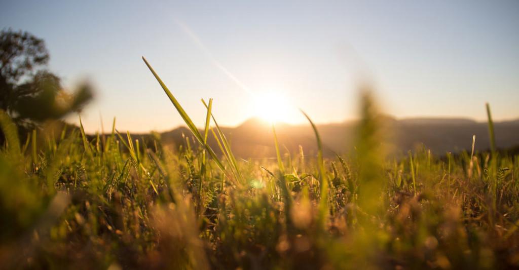 grass-1668423_1280