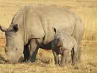 60% των πληθυσμών σπονδυλωτών ζώων έχει «χαθεί» σε λιγότερο από 50 χρόνια
