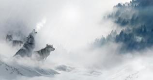 wolf-1350243_1280
