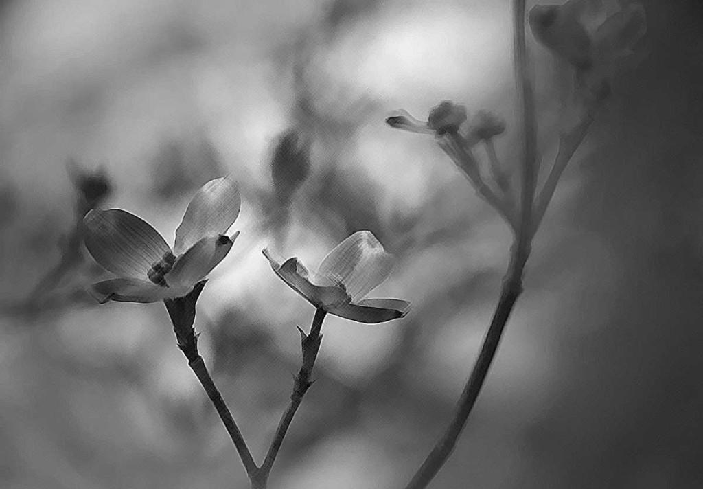flower-2419960_1280