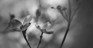 flower-2419960_1280-1024x712