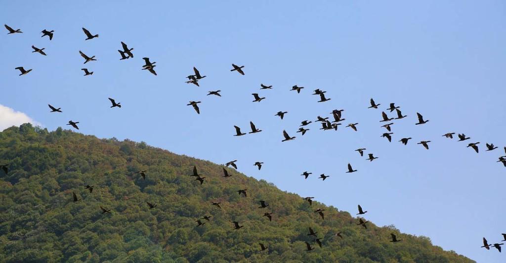 birds-3650527_1280