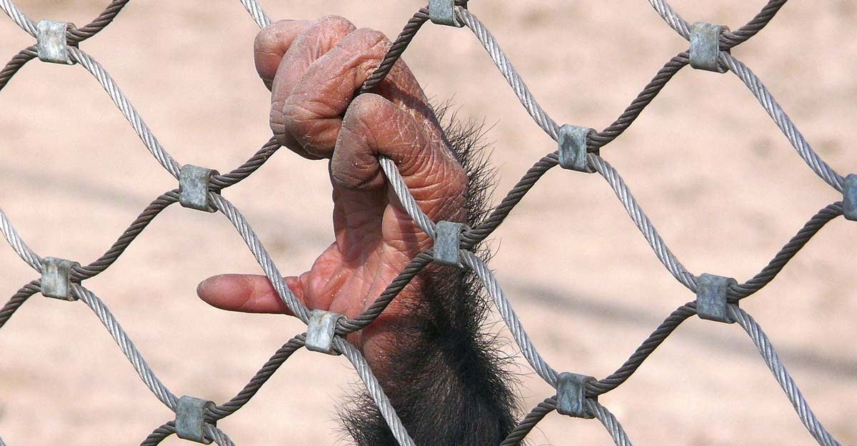 monkey-1863833_1920-(1)