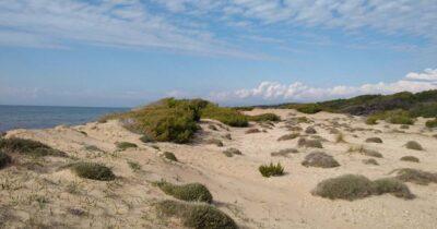 για τη θάλασσα που μας συντροφεύει, για την αμμουδιά που γεννάει μικρές χελώνες και μεγάλες ελπίδες