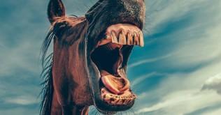 horse-868971_19202