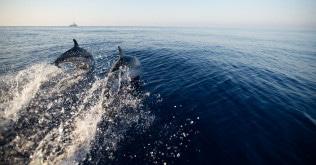 striped-dolphin-©-F.-Bassemayousse---WWF-France22