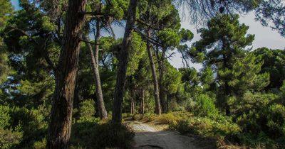 Τοποθέτηση Ορνιθολογικής, Ελληνικής Εταιρίας Προστασίας της Φύσης και «Καλλιστώ» για το περιβαλλοντικό νομοσχέδιο