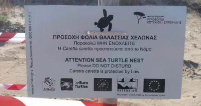 Με δύο φωλιές ξεκίνησε η περίοδος ωοτοκίας του 2019 για την Caretta caretta στον Κυπαρισσιακό Κόλπο
