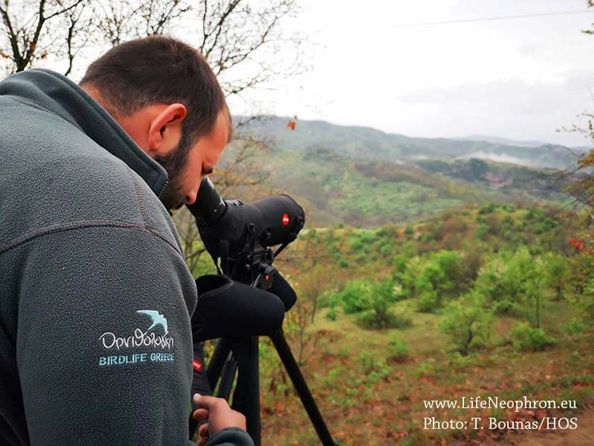 monitoring-of-the-egyptian-vulture-in-2019-on-the-balkans-Vavylis