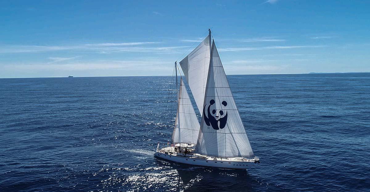 Blue-Panda-10_1