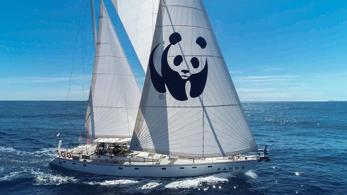 Blue-Panda-40_1