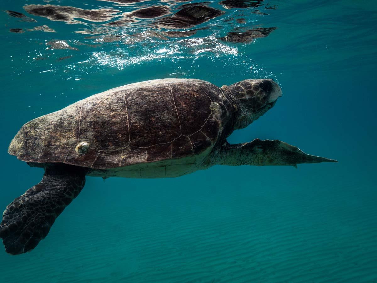 ©Joakim Odelberg - WWF Ελλάς