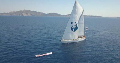 Ζάκυνθος: Το νησί τηςCaretta caretta λέει όχι στις εξορύξεις